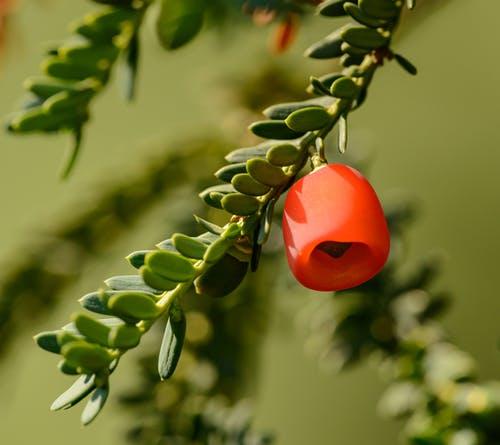 Taxus van Haagplanten Heijnen